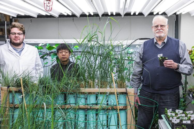 Geneticky modifikovaná rastlina