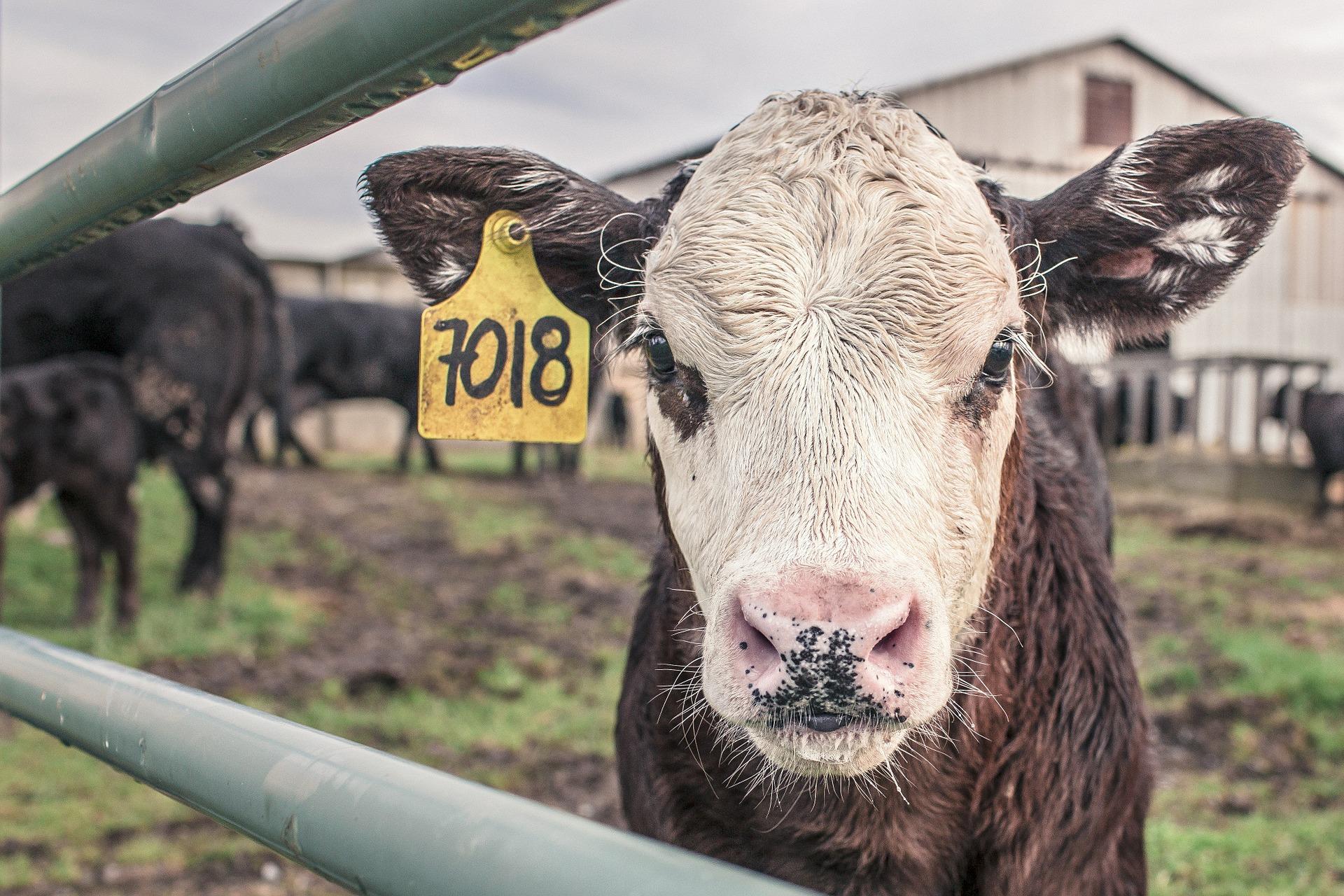 Livestock Insider