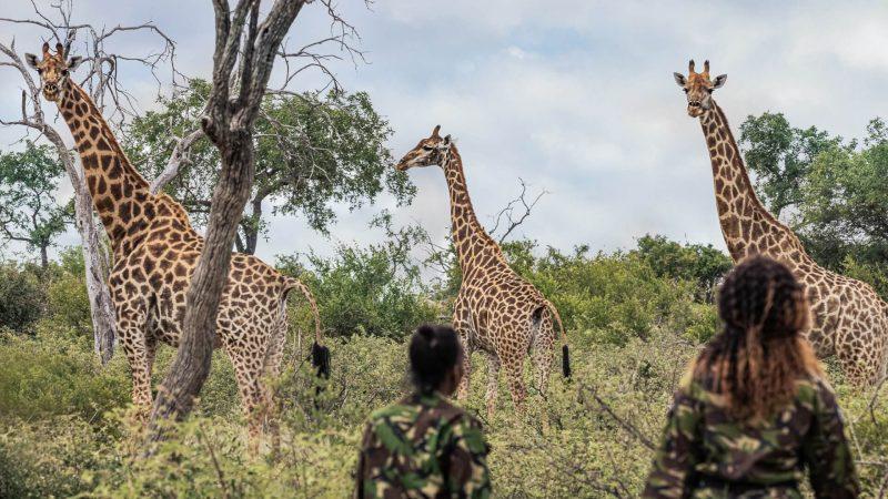 wildlife watch (